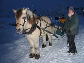 Bilde av hest og slede på tur på Trabelia campingplass