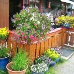 Bilde av blomster satt opp utenfor hytte på Trabelia campingplass